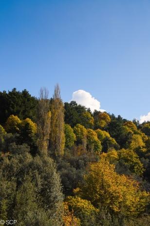 Autumn, November, 9